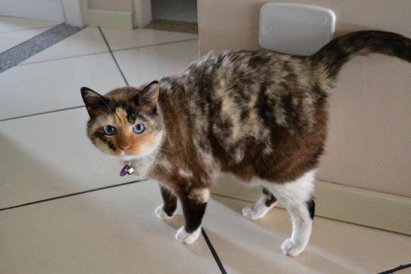 Nanda é a gatinha mais cheirosa q eu conheço e muito companheira. No inverno ela é nosso cobertorzinho ambulante e acompanha todos os dias nossos banhos. Adora atum, água de coco e muito amor. Por Day Duarte